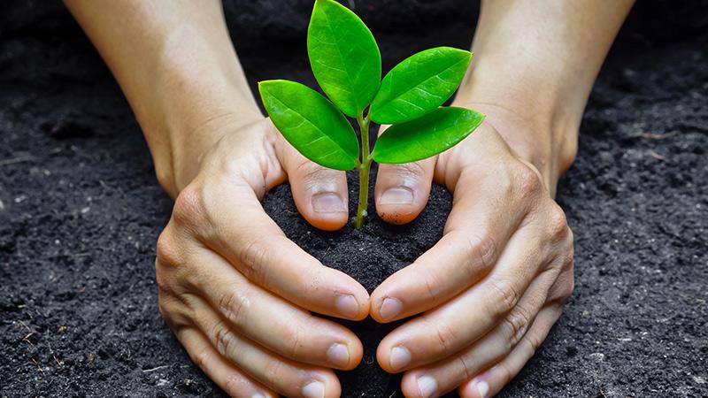 بهترین زمان برای کاشت درخت