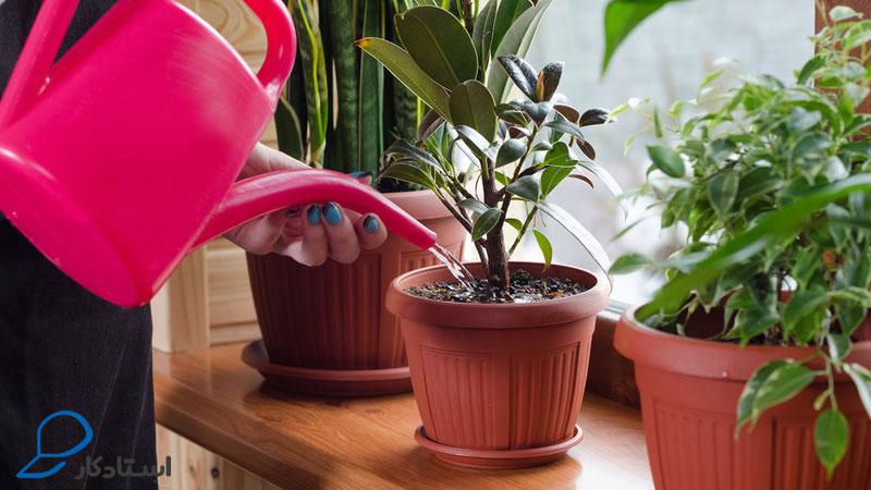 اصول آبیاری گیاهان آپارتمانی