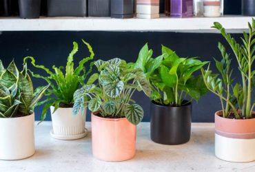 گیاهان آپارتمانی مناسب برای اتاق خواب