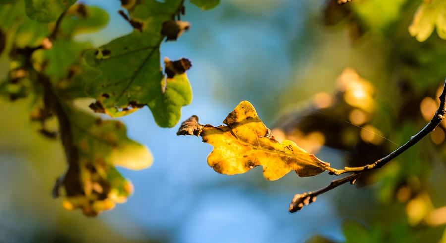 سوختن برگ ها