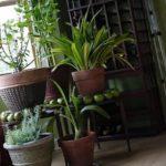 houseplant تمیز کردن برگ گیاهان آپارتمانی و نکات مربوط به آن