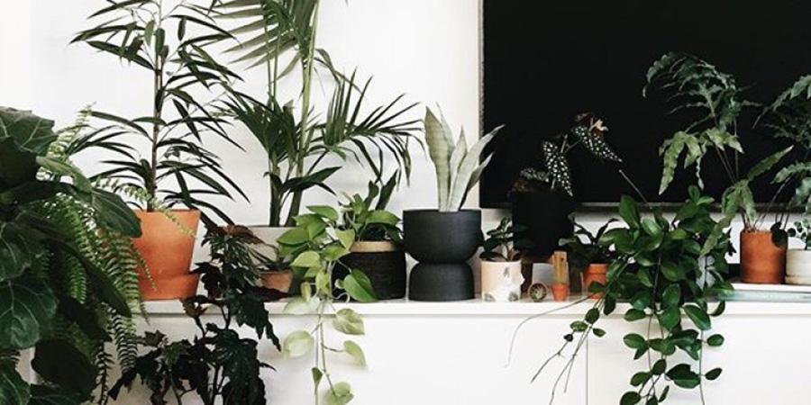 گیاهان مقام آپارتمانی