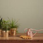 تمیزکردن گیاهان آپارتمانی