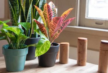 فنگ شویی با استفاده از گل و گیاه و جذب انرژی به وسیله آنها